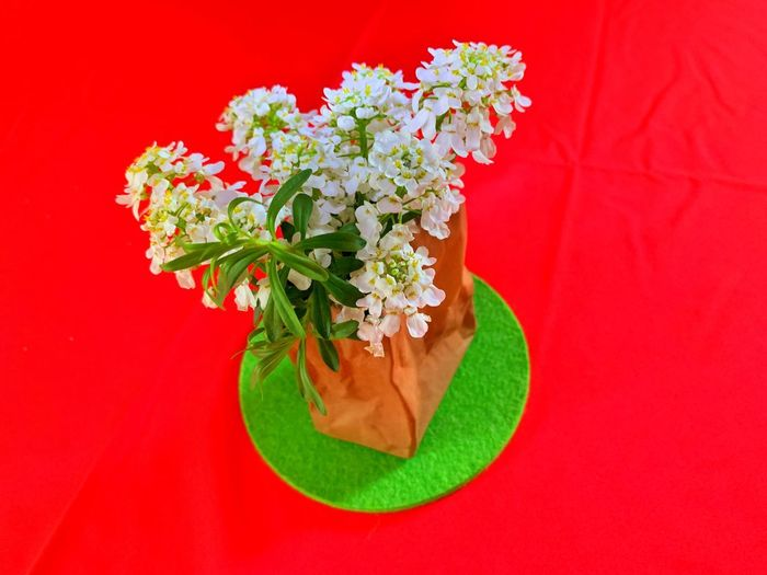 Red Plant Freshness Flower Flowering Plant Colored Background Red Background No People Indoors  Still Life Green Color