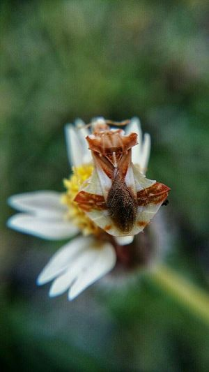 Macro Insects Insect_perfection Insect Photography Insect Macro  Macro Magic