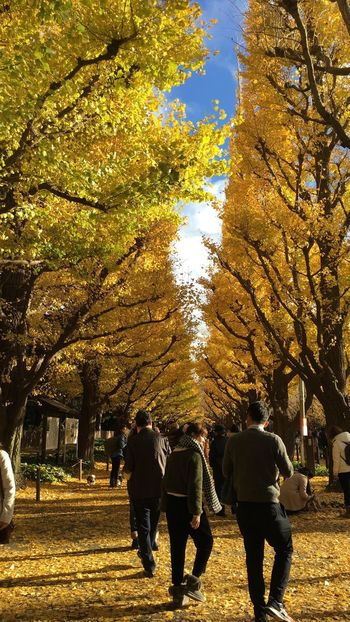 仲睦まじい。 Fall Colors Fall Autmn Colors Autumn From My Point Of View Landscape EyeEm Best Shots EyeEmBestPics Sunset_collection Sunset Silhouettes Showcase: November Sunset Silhouette Yellow Leaf Leaves Beauty In Nature Nature Trees Avenue Allee Ginkgo Tree Maidenhair Tree Ginkgo People