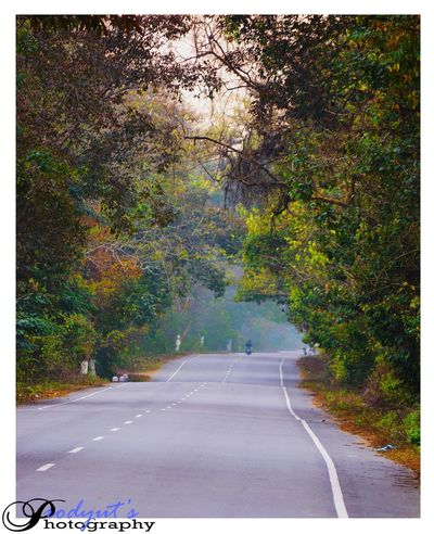 Road Tree Outdoors Day Landscape Scenics No People Nature