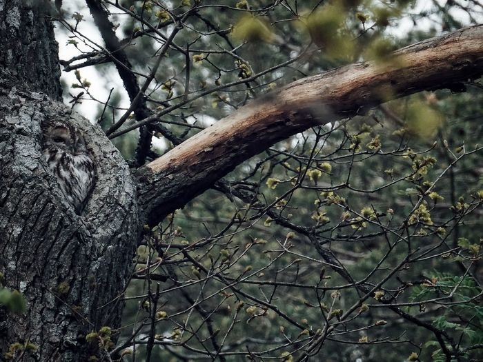 Low angle view of bare tree in forest