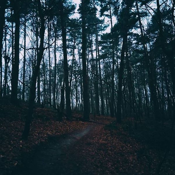 Якось так вийшло) Endoftheday Vscocam VSCO Cold Evening Wood Nature Waybackhome Trail Dusk Meizu Meizuphoto Capture Moments Mobilephotography Photooftheday Phoneonly