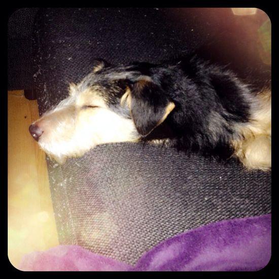 My Lovely Dog MyPuppy❤ Tierddog