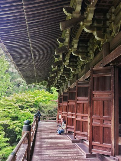 Maniden above the trees || Engyoji Temple Travels Travel Traveling Travelling Explore Nippon The Last Samurai Outdoors
