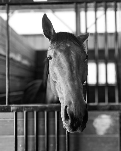 Racehorses Horse Photography  Rescue Animals Oil Pump Portrait Looking At Camera Horse Close-up Paddock Stable