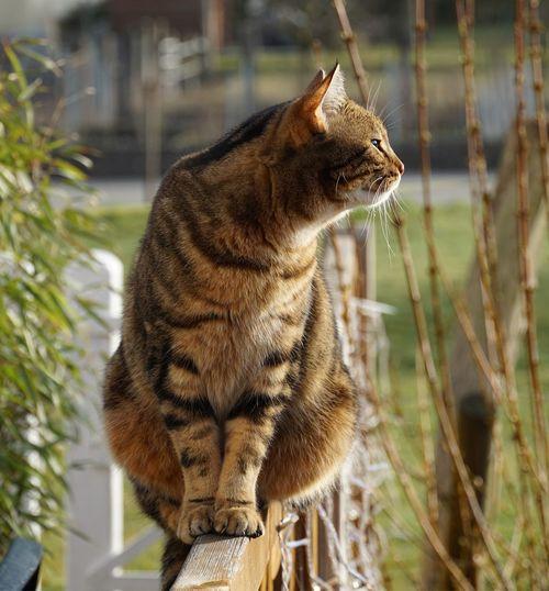 CAT Animal Themes Animal One Animal Animal Wildlife Animals In The Wild Vertebrate Mammal