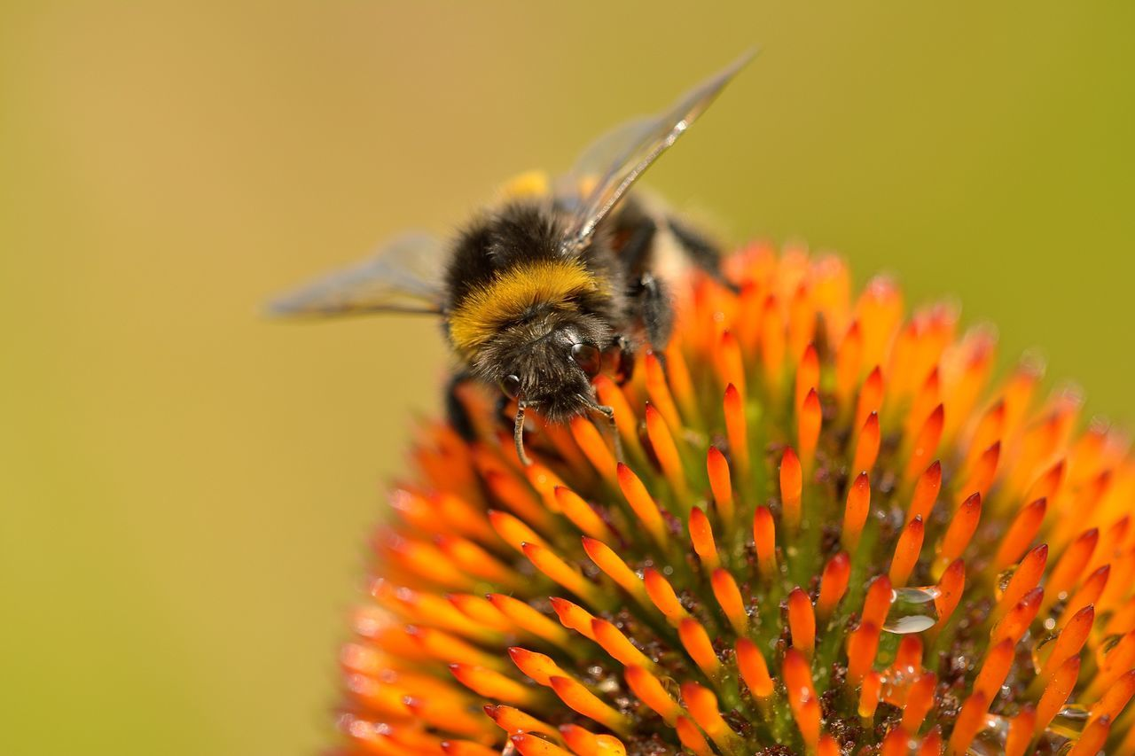 Close-Up Of Bee On Flowers Against Blurred Background