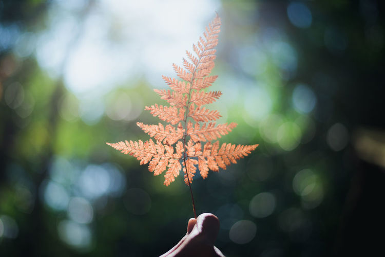 Human Hand Human Body Part Leaf Hand Plant Part Autumn Plant Nature Tree One Person Focus On Foreground Change Body Part Day Real People Close-up Personal Perspective Maple Leaf Finger Human Finger Outdoors Leaves