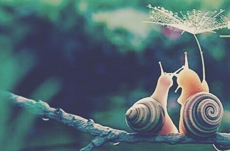 Snail One