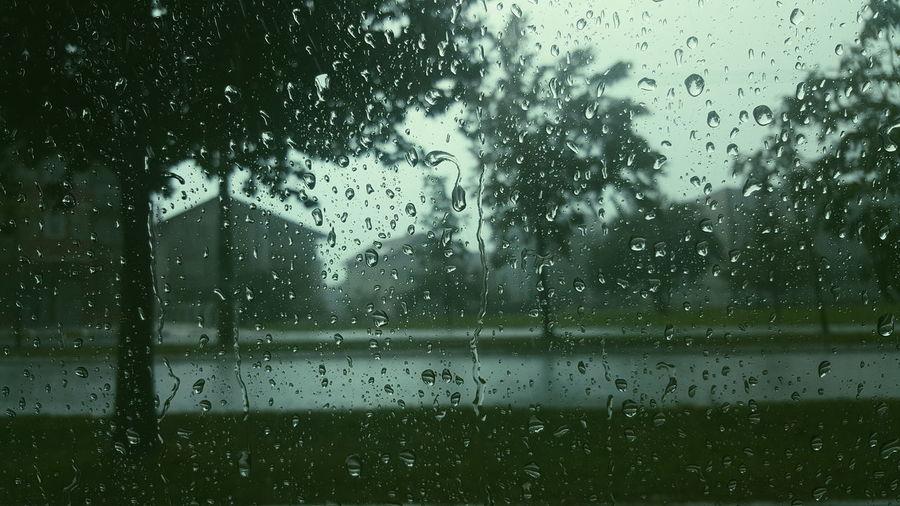 Rainy day Rain