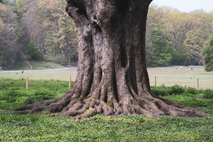 Tree trunk on field in park