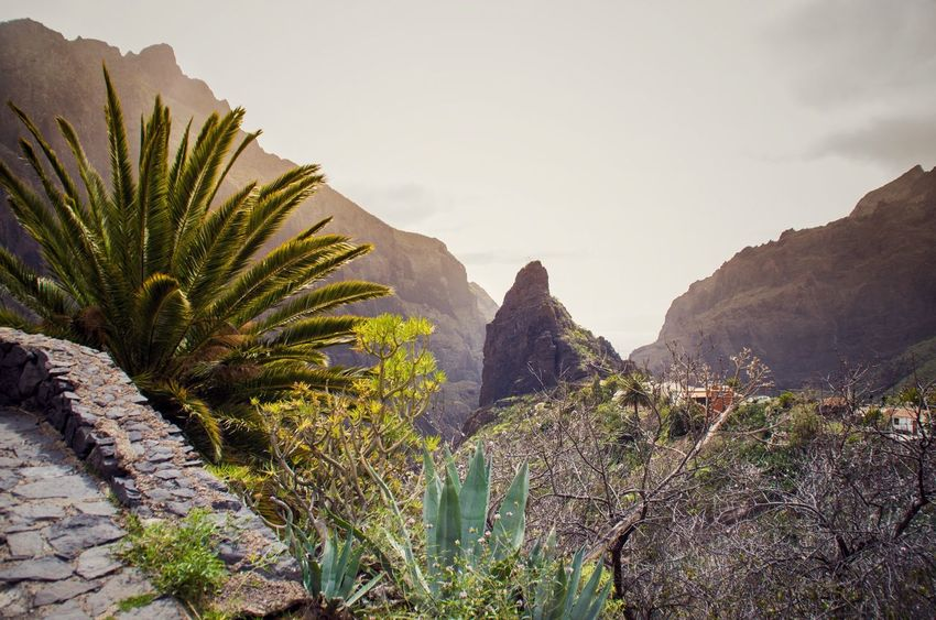 Taken while hiking up the Masca Valley. The rain was just coming in, faint like mist, but we were glad of it when we finally reached the top. Beauty In Nature Canary Islands Day Landscape Masca Masca Valley Mountain Nature Outdoors Palm Tree Palm Trees Peak Rock Formation Rocky Mountains S Sky SPAIN Spring Tenerife Tranquility Tree Volcanic Landscape The Great Outdoors - 2016 EyeEm Awards Fine Art Photography Colour Of Life