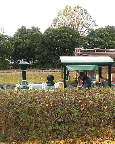 Train Park Train Train Ride Train Driver Showa Kinen Park Japanstreetphotography Streetphotography Japannov2016 Japanautumn2016 Japanautumn