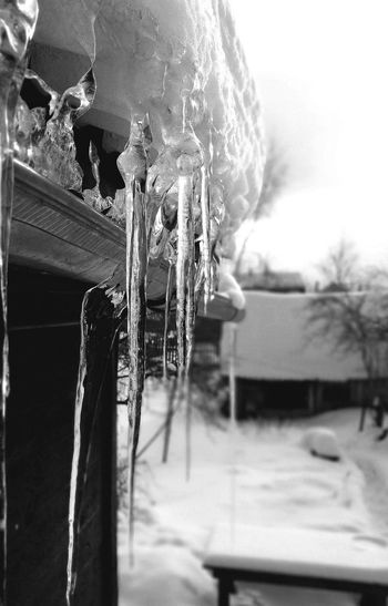 Close-up of icicles hanging on wall