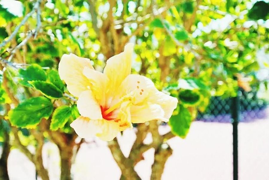 Flowers Tropical Nature