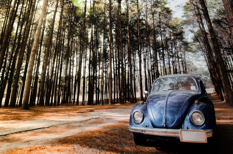 Vintage car in forest