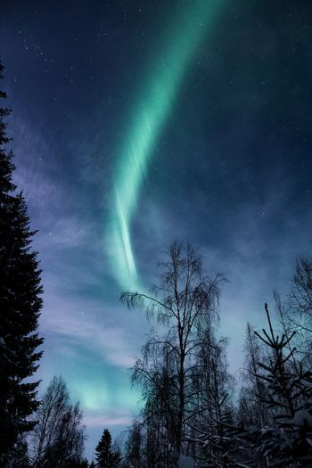 Painting the sky Tree Sky Beauty In Nature Low Angle View Cloud - Sky Night Astronomy Star - Space Nature Tranquility Tranquil Scene No People Silhouette Idyllic Space Landscape Green Color Northern Lights Aurora Borealis Lapland Outdoors Scenics Hello World Travel Winter