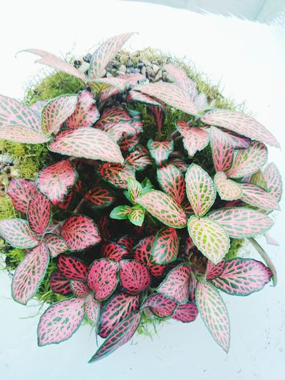 Terrarium Indoorplant Indoorplants Moss Officeplants Plantvein Herb Close-up Plant Food And Drink
