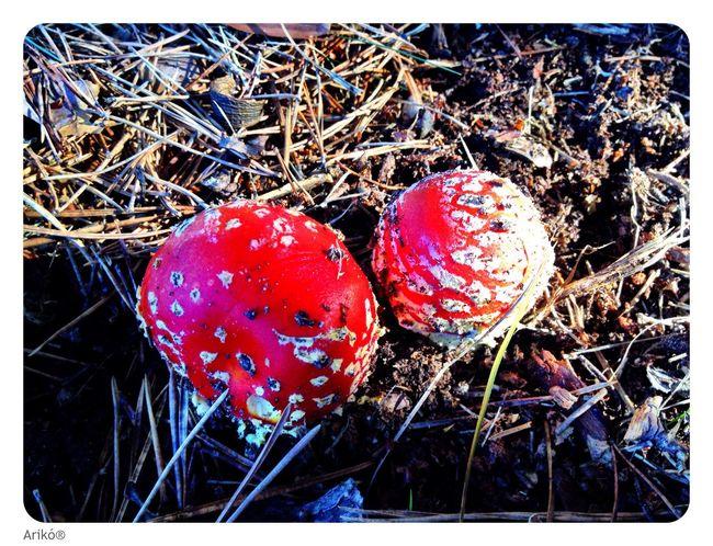 Life in... Escorial Red Mushroom Nature Gnomo Love Road SPAIN Madrid Happy Tree Forest Friends Hello World