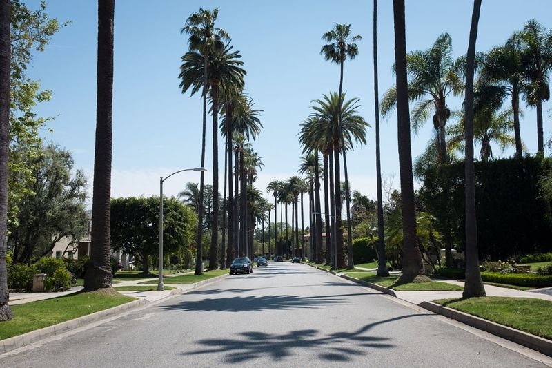 Road amidst palm trees against clear sky