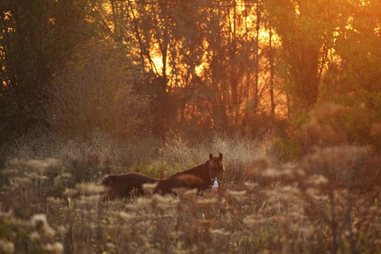 Horse Sunset Autumn Field One Animal Animal Animal Themes Nature Domestic Animals No People Outdoors Light Light And Shadow Sunlight Mammal Plant Tree Land Vertebrate Forest Pets Animal Wildlife Domestic Day Selective Focus Autumn Mood My Best Photo
