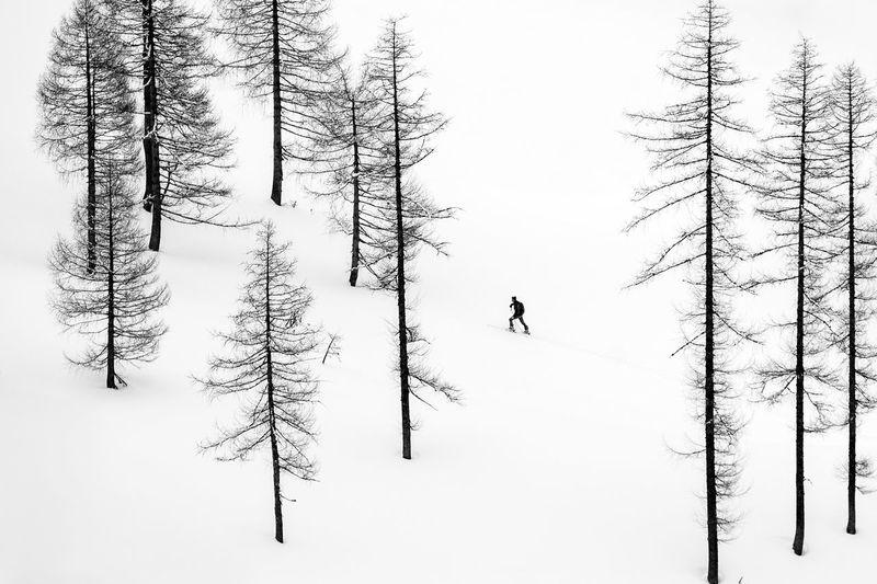 Silhouette of skier ski touring between bare trees, austria.