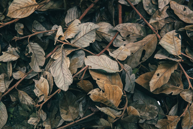 Autumn Change Fall Fall Beauty Forest Forest Photography Fragility Leaves Leaves_collection Leaves🌿 Natur Nature Nature Nature_collection Outdoors