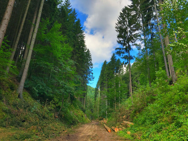 forest track with tree trunks in Esthal Beauty In Nature Cloud Cloud - Sky Day Dirt Road Esthal Footpath Forest Forest Path Forest Track Forestwalk Green Green Color Nature Nature No People Non-urban Scene Outdoors Road Sky Track Tree Tree Trunk Trees Trees And Sky
