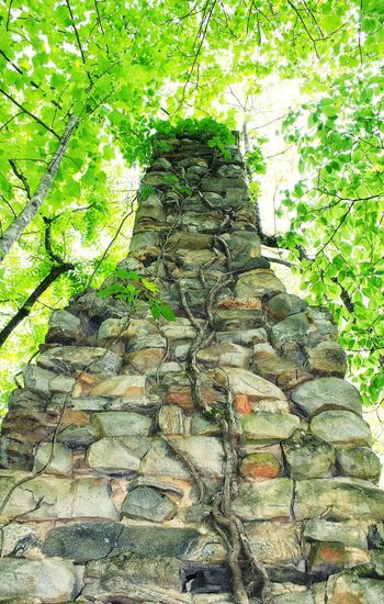 Chimney Old Abandoned Rocks Stonework Looking Up Look Up Tree Canopy  Rock Chimney Tall Standing Alone Historic Standing Alone Old Rock Chimney From My Point Of View From My Eyes To Yours Letgodhandleit Vines Growing Between Rocks Rock Wall With Trees All That Remains Old Chimney History All That Remains Is The Chimney EyeEm Diversity The Secret Spaces Art Is Everywhere Break The Mold
