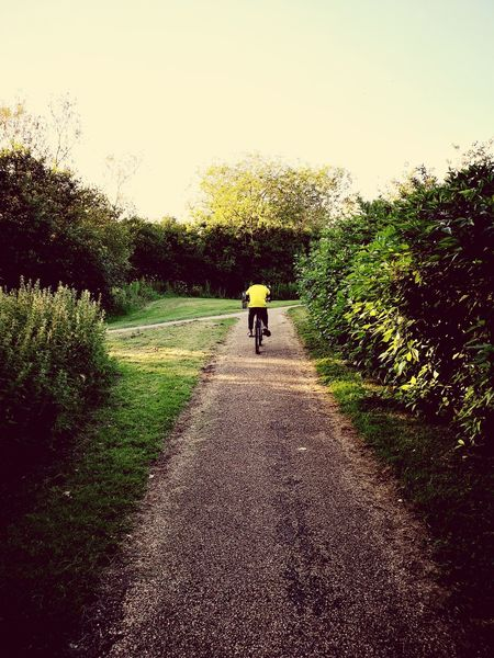 Cycling Cycling In Nature Tree Full Length Standing Silhouette Sky Grass Hiker