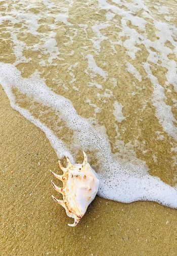 High angle view of crab on beach