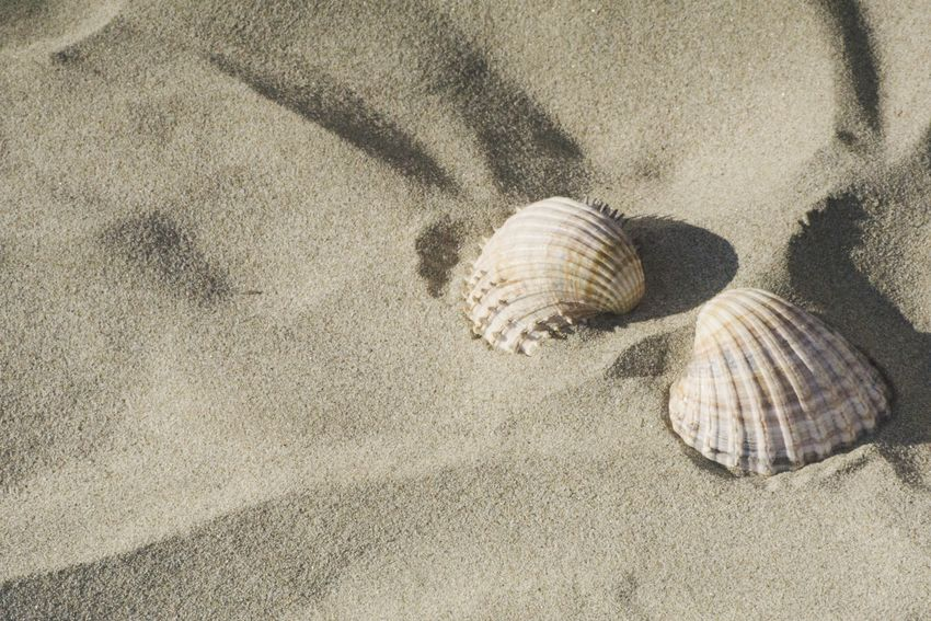 Sand Beach Animal Shell Nature Day Animal Themes Seashell High Angle View Outdoors Sunlight No People Close-up Sea Seashells Seaside Summer Exploratorium