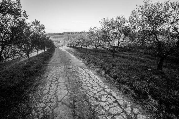 Beautiful Beauty In Nature Cracks Cracks And Shadows Day Grape Vines Italy❤️ Landscape Leading Lines Light And Shadow Nature No People Outdoors Sky Sunset Sunset_collection The Way Forward Time For Wine Tree Trees Tuscany Tuscany Countryside Winery
