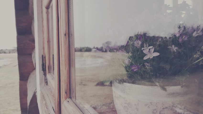 Window Flower Day Nature Outdoors Plant No People Close-up Sky Just Something Seeking Inspiration Mood Of The Day Reflection_collection Reflections In The Glass Windows Flowers_collection Window View Window Frame Window Reflections