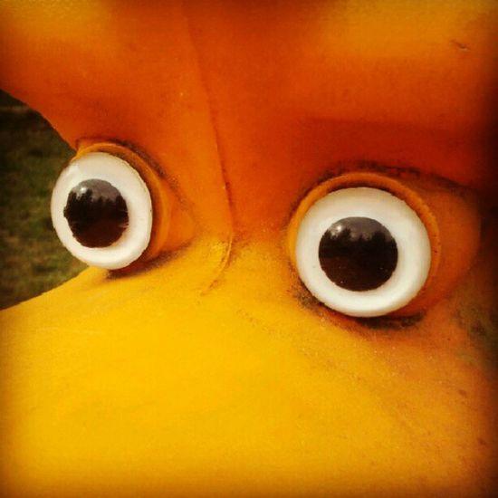 Schau mir in die Augen, Kleines.