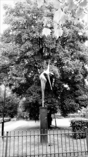 Blackandwhite Eyem Black And White Balance In Balance With Nature In Balance Art And Nature