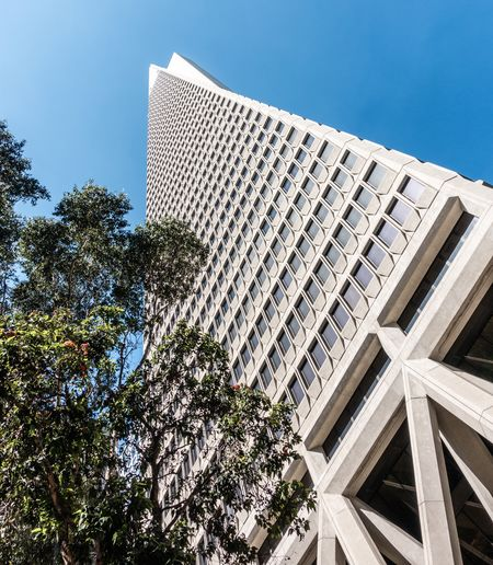 Built Structure Sky Architecture Building Exterior Low Angle View Tree Plant Nature Building Day No People City Modern Clear Sky Tall - High Outdoors Office Building Exterior Blue Tower Sunlight Skyscraper TransAmericaBuilding Transamerica Pyramid