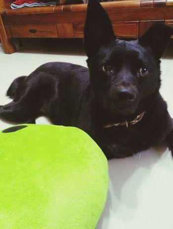 Dog dog Cute