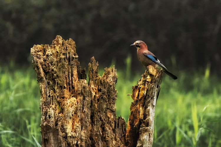 Close-up of bird perching on wooden post