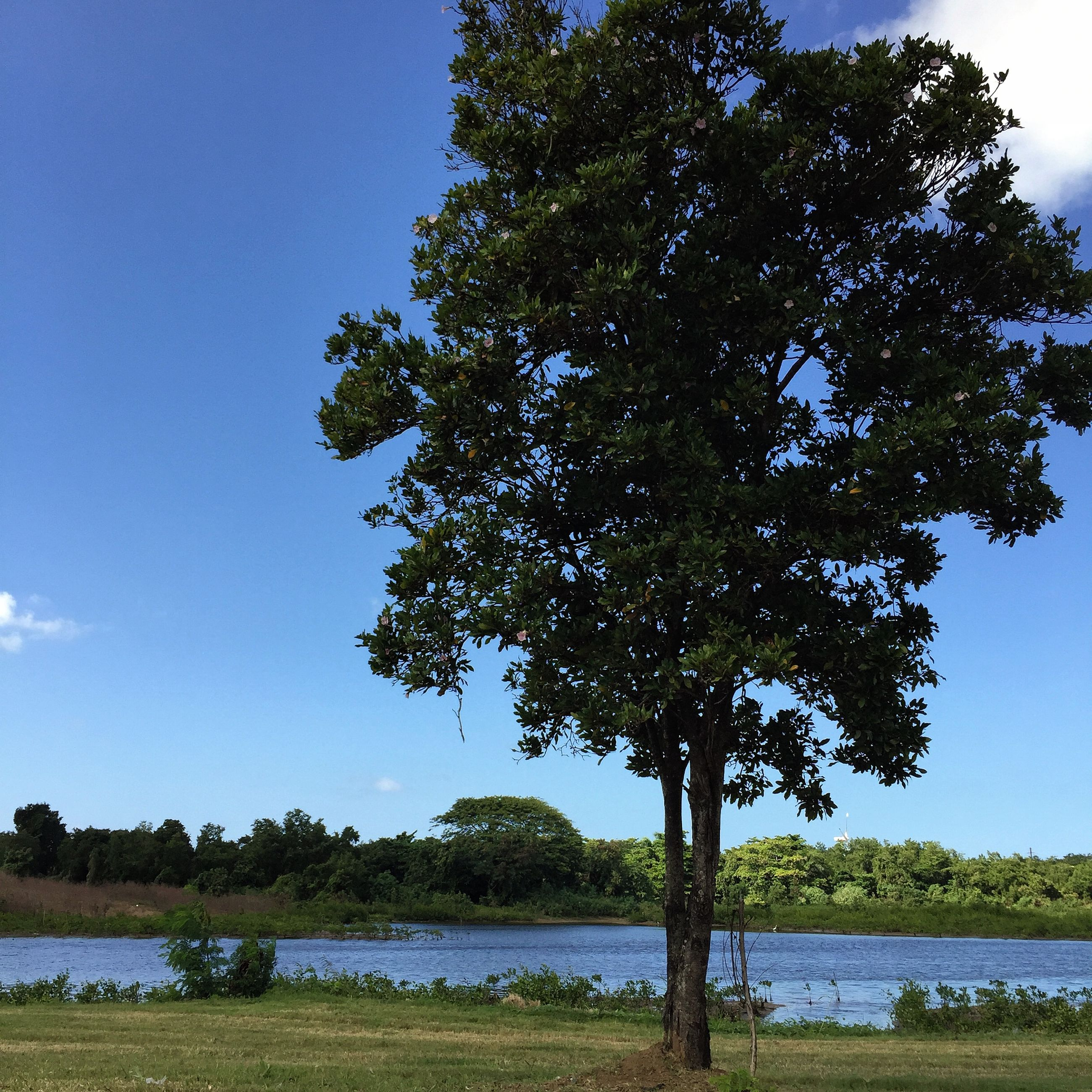 water, tree, tranquil scene, tranquility, lake, scenics, clear sky, blue, beauty in nature, grass, nature, growth, sky, lakeshore, river, idyllic, landscape, riverbank, countryside, tree trunk