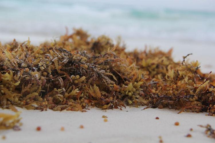 Close-up of plants at beach