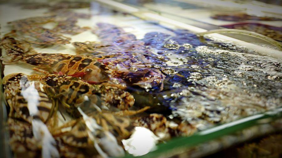 Fish Tank HongKong Leicaq Leica Discoverhongkong Fish Hello World EyeEm Nature Lover EyeEmBestPics EyeEm Gallery Eyeemphotography EyeEmBestEdits EyeEmbestshots Pmg_hok