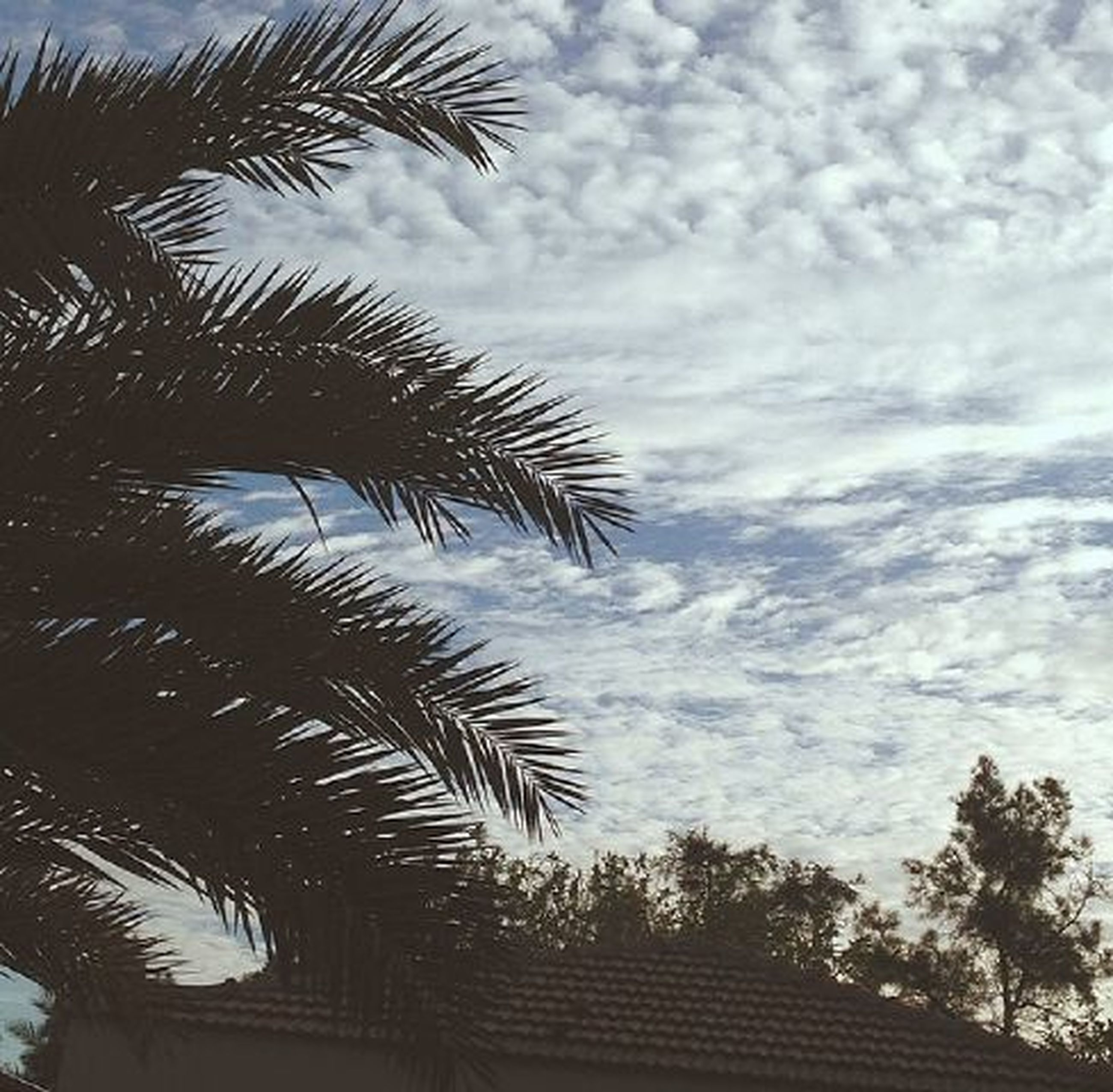 palm tree, sky, tree, low angle view, cloud - sky, growth, cloudy, cloud, nature, tranquility, beauty in nature, built structure, scenics, coconut palm tree, outdoors, palm leaf, no people, day, architecture, building exterior