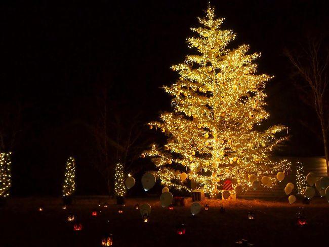 Christmas Merry Christmas! Christmas Tree Christmas Lights