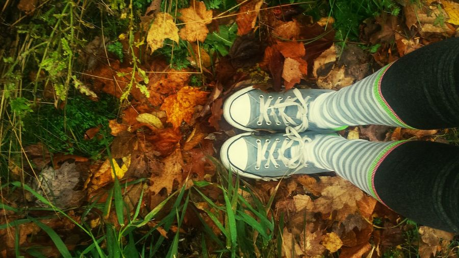 One Person Growth Nature Canvas Shoe Fall Collection Fallen Leaf Autumn2016 Tranquility Good Morning✌♥ Solvay House Solitude Hospice