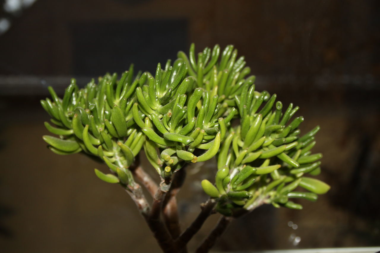 Close-Up Of Green Plants Growing Outdoors
