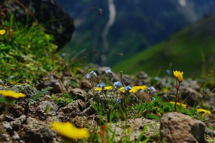 Приэльбрусье Эльбрус горы гора Кавказ кавказские горы приэльбрусье First Eyeem Photo Mountains Mountain Elbrus Flowers Nature