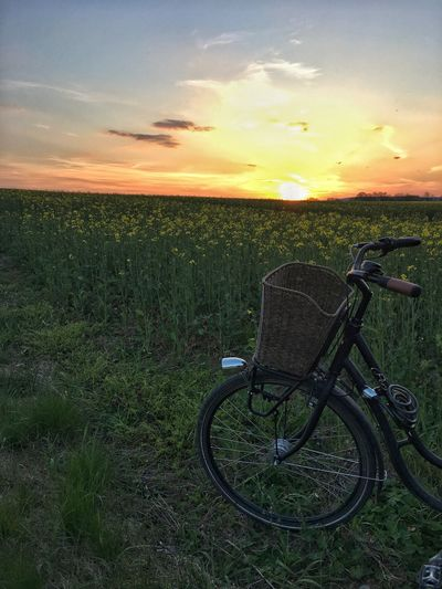 Bicycle and sunset over a rapeseed field Bicycle Sunset Field Transportation Grass Nature Sky Stationary Mode Of Transport Land Vehicle Scenics Tranquil Scene Tranquility Outdoors No People Growth Beauty In Nature Cloud - Sky Landscape Rural Scene Spring Rapeseed Field Rapeseed Lovely View The Great Outdoors - 2017 EyeEm Awards