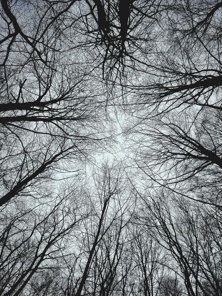 View Up Tree Sky Day Backgrounds Full Frame Pattern Textured  Abstract Close-up Foggy Tranquil Scene Calm Woods Non-urban Scene Cloud