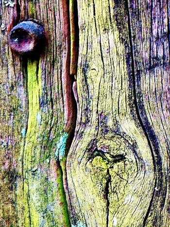 Goodmorning EyeEm  Eyemphotography Eyem Gallery OpenEdit Nature Eyemnaturelover Feelingfree Details EyeEm Nature Lover Germany